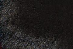 Naturalny futerkowy tekstury tło w wzrosta postanowieniu Zdjęcie Royalty Free