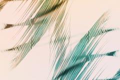 Naturalny geometrical wystrój sztuki palmy wzór Tonujący ilustracja wektor