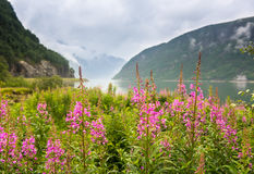 Naturalny Hardangerfjord fjord krajobraz Norway Zdjęcia Royalty Free