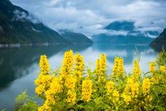 Naturalny Hardangerfjord fjord krajobraz Norway obrazy royalty free