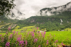 Naturalny Hardangerfjord fjord krajobraz Norway Obraz Stock