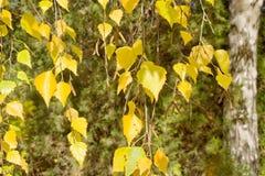Naturalny jesień krajobrazu tło Zdjęcia Stock