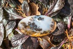 Naturalny kamienny agat na kolor żółty roślinach suchych Burgundy liściach i Zdjęcie Stock