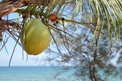 Naturalny Kokosowy drzewo Zdjęcia Royalty Free