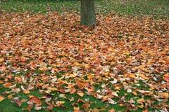Naturalny koloru dywan Fotografia Stock