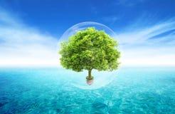 Naturalny krajobraz. ekologiczny pojęcie Obraz Stock