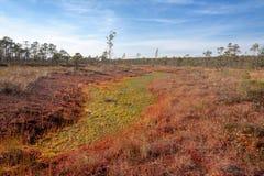Naturalny krajobraz w bagnistej rezerwie obrazy stock