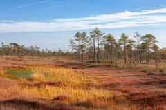 Naturalny krajobraz w bagnistej rezerwie zdjęcia royalty free