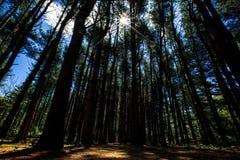 Naturalny krajobraz z drzewami w lesie zdjęcie stock