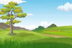Naturalny krajobraz z Dużym drzewem na Zielonym wzgórzu i droga przemian W kierunku horyzontu Zdjęcie Stock