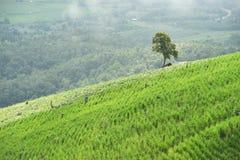 Naturalny krajobrazowy widok kukurydzany pole i ryżu pole nad górą w Chiangmai Zdjęcia Stock
