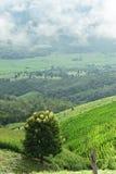 Naturalny krajobrazowy widok kukurydzany pole i ryżu pole nad górą w Chiangmai Obrazy Stock