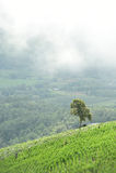 Naturalny krajobrazowy widok kukurydzany pole i ryżu pole nad górą w Chiangmai Zdjęcia Royalty Free