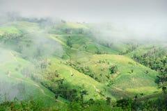 Naturalny krajobrazowy widok kukurydzany pole i ryżu pole Obraz Royalty Free