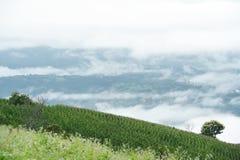 Naturalny krajobrazowy widok kukurydzany pole i ryżu pole Obrazy Royalty Free