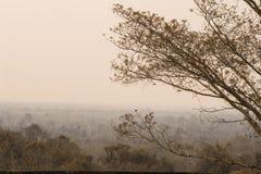 Naturalny który zakrywa z smogiem obrazy royalty free