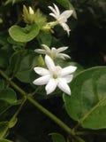 Naturalny kwiat Obrazy Stock
