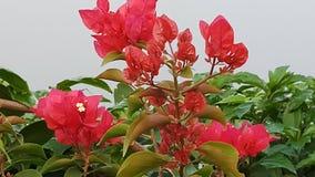 Naturalny kwiat w ranku Obraz Stock