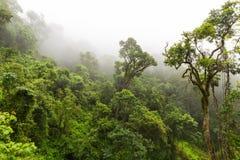 Naturalny las przy Magoebaskloof Fotografia Royalty Free