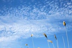 Naturalny lata tło z kopii przestrzenią, nadziemski krajobraz Gałąź płochy przeciw tłu jaskrawy niebieskie niebo z zdjęcia royalty free
