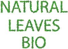Naturalny, liście, życiorys inskrypcja zieleń opuszcza z kroplami Obrazy Royalty Free
