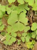 Naturalny liścia wizerunek Zdjęcie Stock