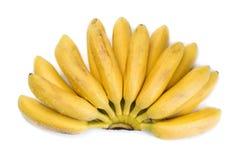 Naturalny mały tropikalny banan w wiązce Obraz Royalty Free