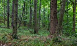 Naturalny mieszany stojak Bieszczady góry region obrazy stock