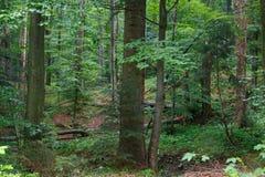 Naturalny mieszany stojak Bieszczady góry region zdjęcie stock