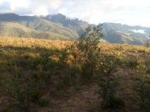 Naturalny montain krzaka montaña życia vida zdjęcie stock
