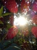 Naturalny obrazek zdjęcia stock