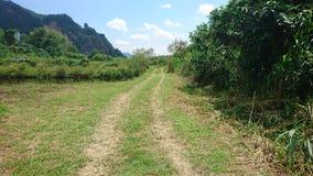 Naturalny obszar trawiasty z niebieskim niebem obraz stock
