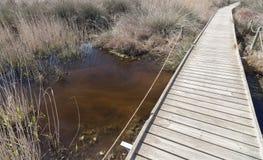 Naturalny ochraniający teren Els Muntanyans w Torredembarra, Costa Dor zdjęcie stock