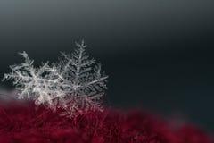 Naturalny płatka śniegu zakończenie Zima, zimno zdjęcia royalty free
