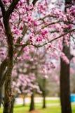 Naturalny park, drzewa, kwiaty Obrazy Royalty Free