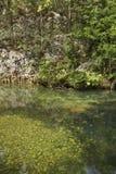 Naturalny park El Cubano Kuba Zdjęcia Stock