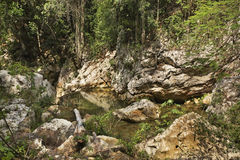 Naturalny park El Cubano Kuba Zdjęcie Stock