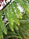 Naturalny piękno przy deszczem i opadowym spadać zdjęcia stock