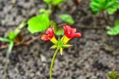 Naturalny piękny dwa kwiatów plamy tło Obrazy Royalty Free