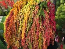 Naturalny piękno kwiat w Bangkok Zdjęcia Royalty Free