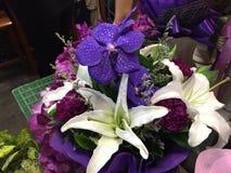 Naturalny piękno kwiat w Bangkok Fotografia Stock