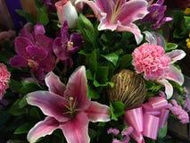 Naturalny piękno kwiat w Bangkok Obrazy Stock