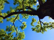 Naturalny piękno w miastowym parku Obraz Stock