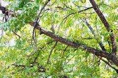 Naturalny poniższy drzewo zdjęcie stock