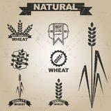 Naturalny pszeniczny wektoru set Obrazy Royalty Free