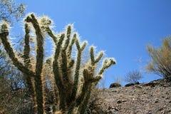 Naturalny pustynia krajobraz Zdjęcie Royalty Free