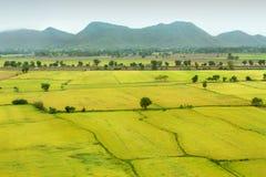 Naturalny ryżu pole Obrazy Stock