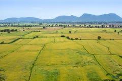Naturalny ryżu pole Fotografia Royalty Free