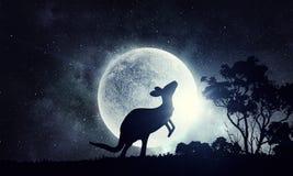 Naturalny safari krajobraz, kangur i Fotografia Stock