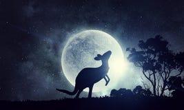 Naturalny safari krajobraz, kangur i Mieszani środki Obraz Royalty Free